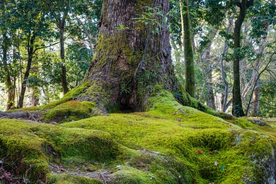 Ancient tree with green moss at the city park in summer day.